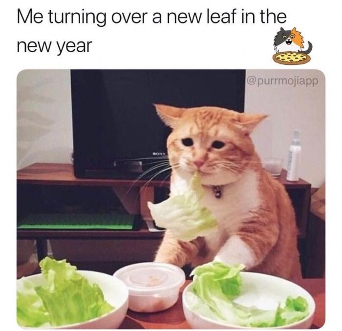 33 43 Hilarious Memes For When You Need A Break Funny Animal Memes Funny Cat Memes Funny Animals