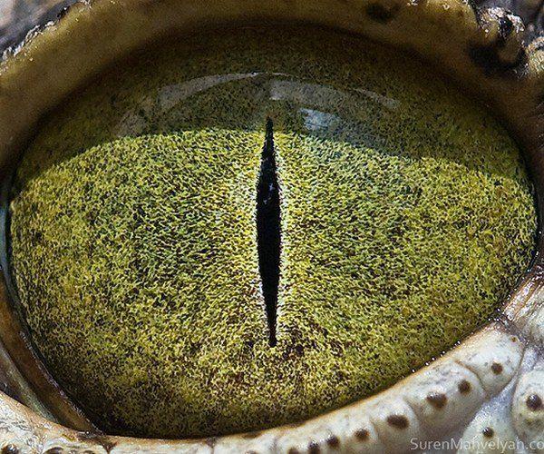 Resultado de imagen para ojos de cocodrilo