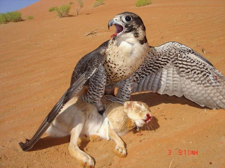 Falcon Killer