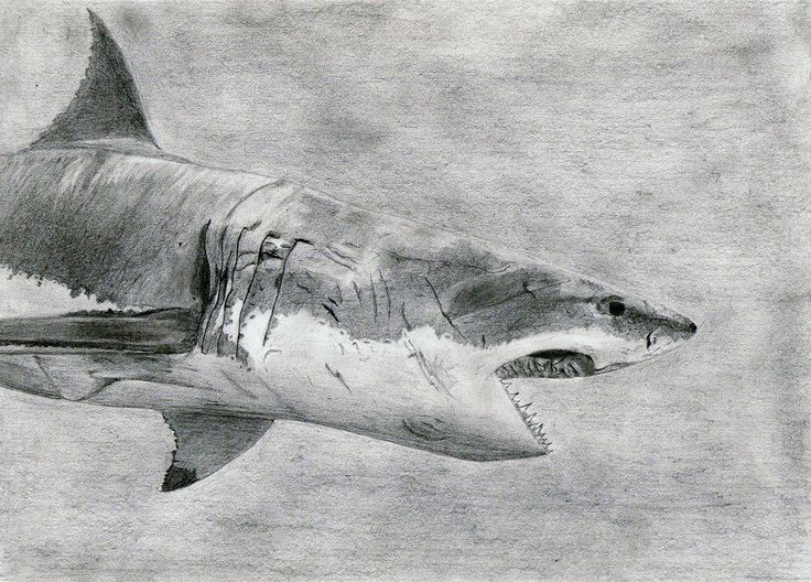 Images of Shark Jumping Drawing - #rock-cafe