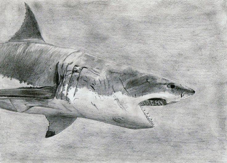 Great White Shark Drawing Drawings Pinterest Sharks