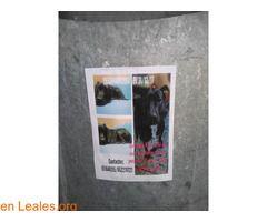 se busca a Kira  #Perdido #Encontrado #sebusca #extraviado #LealesOrg  Contacto y info: Pulsar la foto o: https://leales.org/perdidos-o-encontrados/perros-perdidos/se-busca-a-kira_i2682 ℹ  mirar cartel por favor   Acerca de esta publicación:   Esta publicación NO ha sido creada por Leales.org y NO somos responsables de su contenido. Ha sido publicada gratuitamente por un usuario en la multiplataforma Leales.org y autodifundida por los servidores en Facebook Twitter Instagram Google LinkedIn…