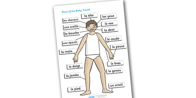 Twinkl Resources >> Parts of the Body (French, A4)   >> Thousands of printable primary teaching resources for EYFS, KS1, KS2 and beyond! eyes, nose, mouth, back, display, chest, tongue, ourselves, all about me, my body, senses, emotions, family, body, growth, french, francais, MFL,