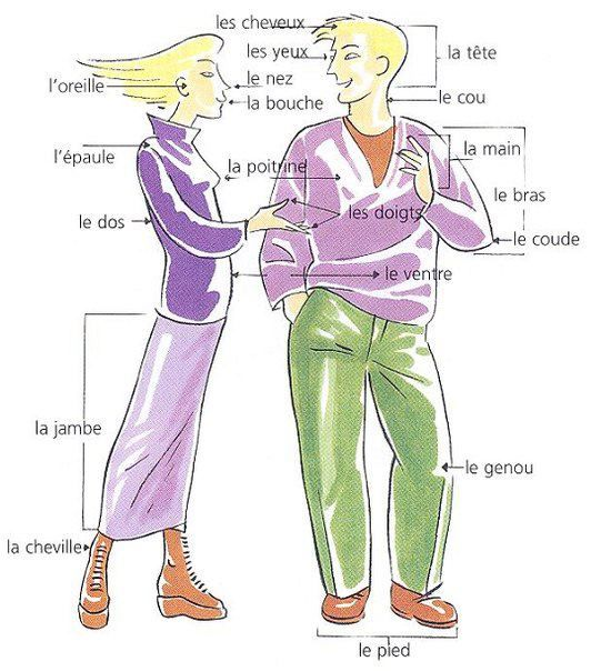Le corps - French Vocabulary: body parts ✿ #frenchteacher #fsl #french #learning #language #spokenfrench #speakingfrench #vocabulary ✿ Repin for later!