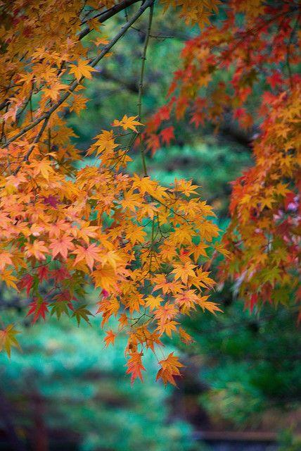 Autumn Reggae ...  spectrum of oranges and turquoise