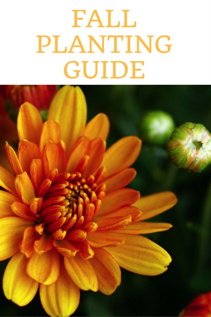 Best 25 Fall Planting Guide Ideas On Pinterest Fall Planting Vegetables Winter Vegetable