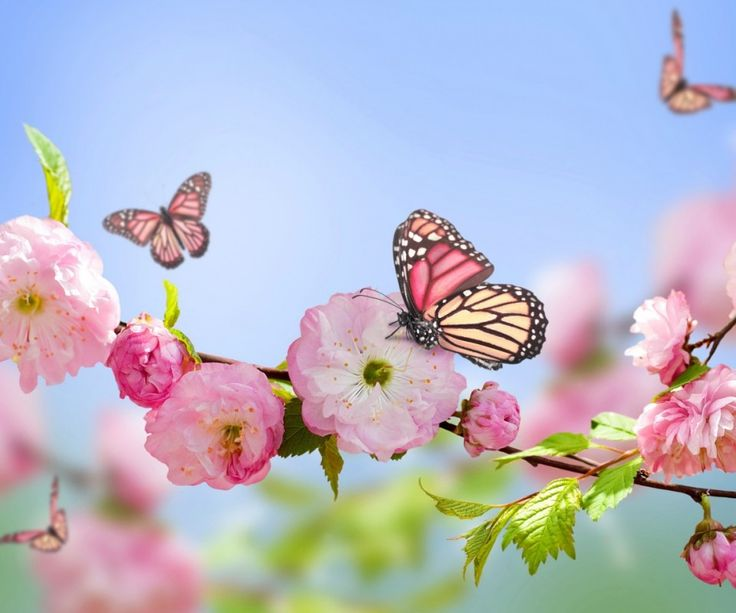 λουλούδι εικόνα - πεταλούδες εικόνες, wallpapers λουλούδια, διάνυσμα άνθιση, την άνοιξη υπόβαθρο, το υλικό υποκατάστημα φόντο 960x800 λουλούδι Τηλέφωνο φόντο της οθόνης κλειδώματος