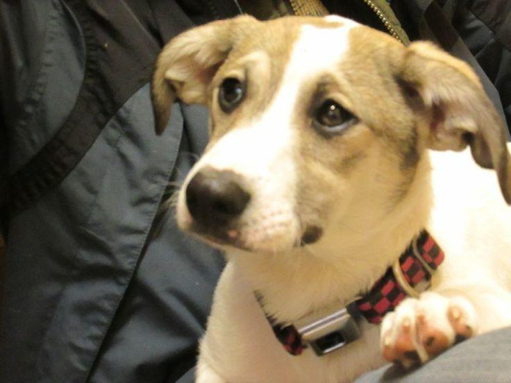 Dogs To Adopt In Kootenai C