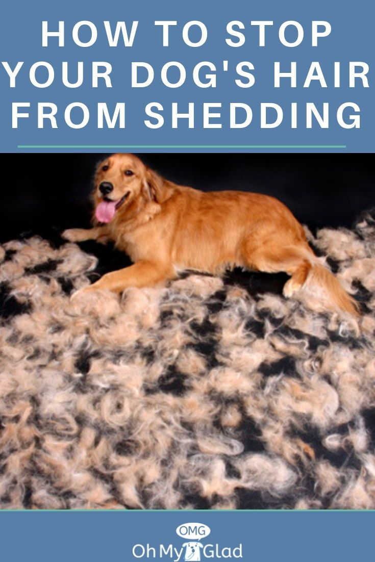 A Quick Way To Deal With Dog Hair Shedding Dog Hair Cleaning Dog Shedding Dogs