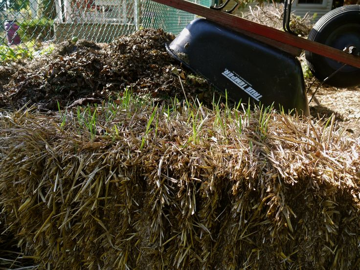 65 best straw bale gardening images on pinterest modern for Straw bale gardening techniques