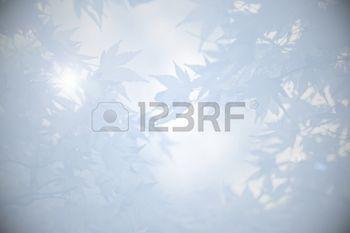 rouw%3A+Rouw+achtergrond+met+esdoorn+bladeren+en+licht%2C+in+grijstinten+Stockfoto