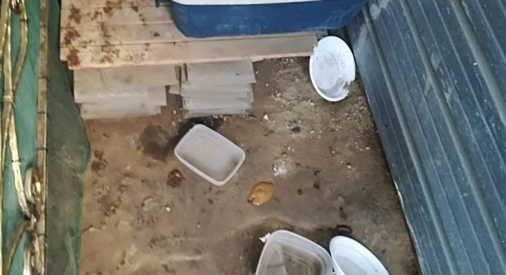 Chiaiano, 36enne deteneva animali in pessime condizioni igieniche e di salute: denunciato   Report Campania