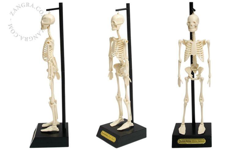 het menselijk skelet