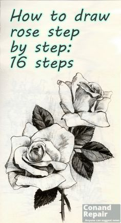 11 best draw a rose images on pinterest step by step for How do you draw a rose step by step