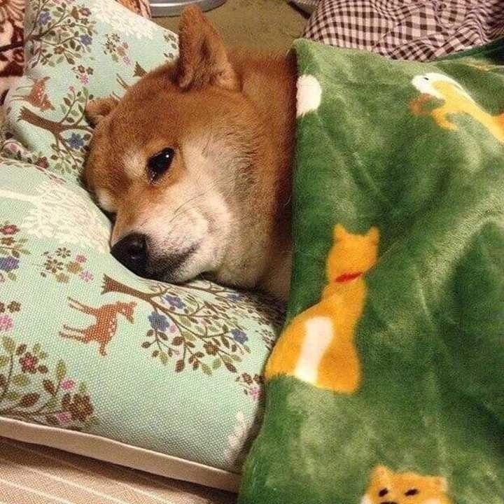 Perrito Dormido Memes De Animales Tiernos Perros Durmiendo Fotos De Animales Tiernos
