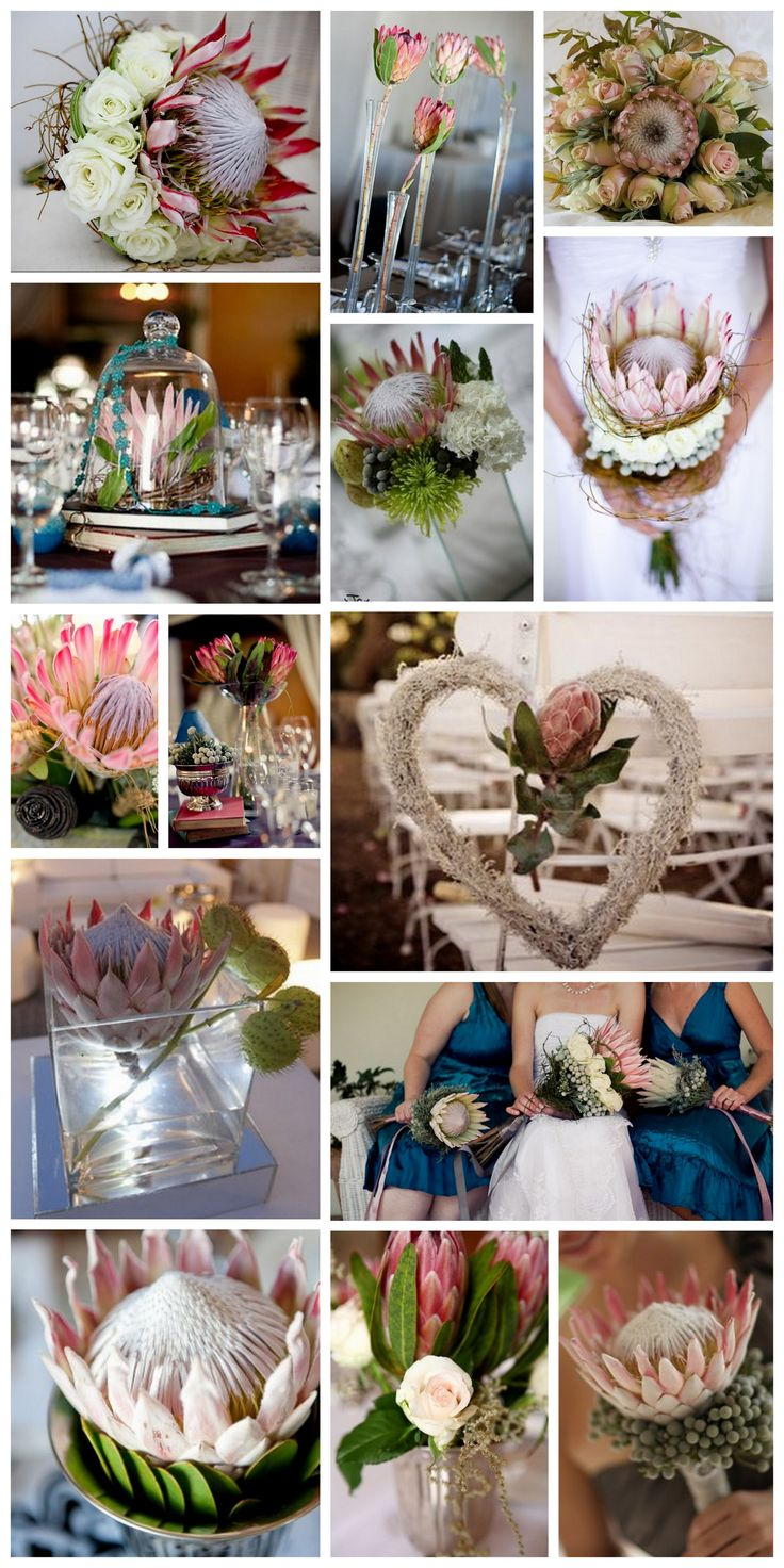 South African Proteas in all their glory for bold wedding bouquets. The Blushing Bride Protea is another small protea flower worth considering for your wedding.