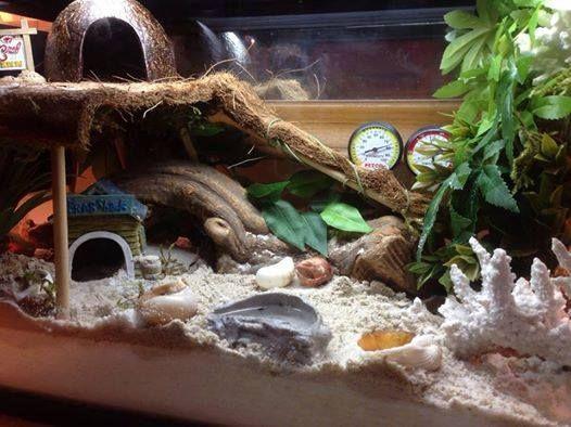 hermit crab tank 10 gallon - Google Search