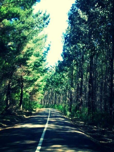 Arauco - Chile