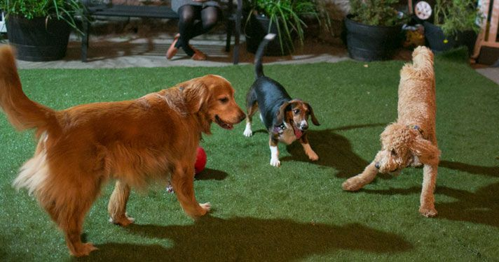 The School Yard A Private Dog Run at School For The Dogs The School Yard is New York's only trainer-supervised private dog run. Dogs who…