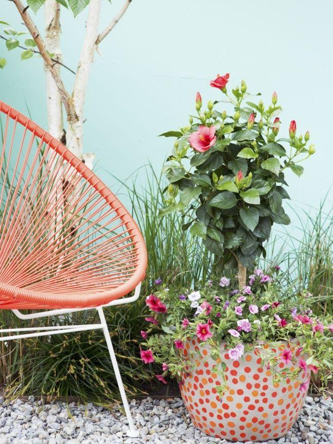Hibiscus Mooiwatplantendoen.nl