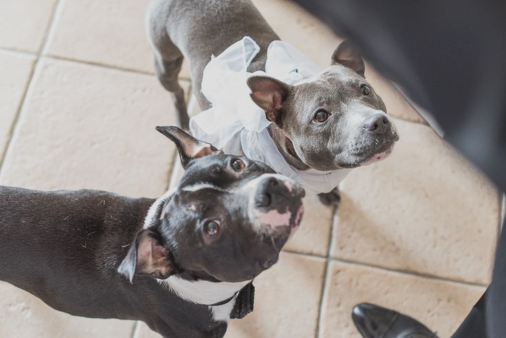 AnDphotography D+L wedding story #andphotography #weddingphotographer #wedding #dogatwedding #bestfriend