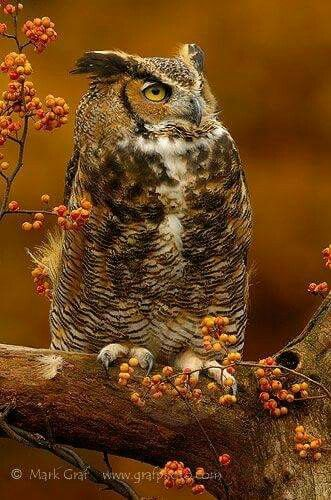 This owl looks like it's thinking of Mother Russia. It's a Happy Worker Owl.