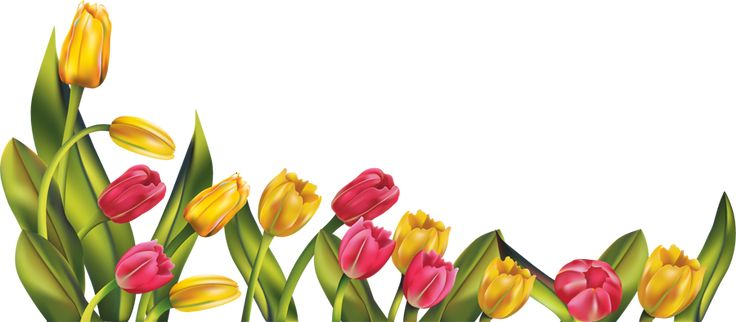 Spring Borders png | res__tulip_border_png_by_hanabell1 ...