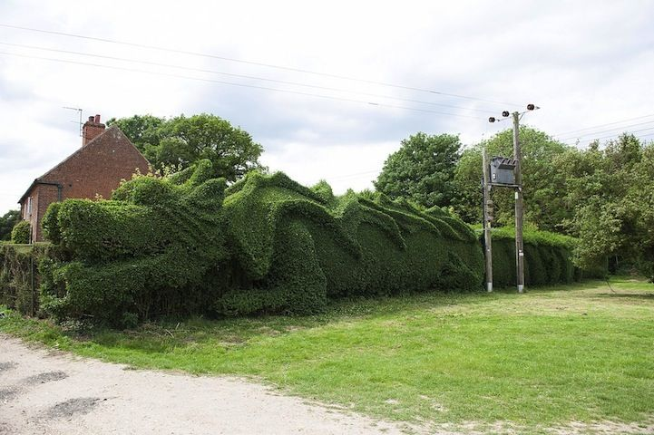 Retired Man Sculpts Giant Hedge Into a 100-Foot-Long Dragon - My Modern Met