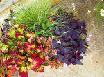 Цветы в горшках и подвесных корзинах - 3 | Страница 88 | Форум: дом и дача