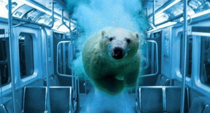Shit like this is why I don't do public transport.: Funny Funny, Animals, Polar Bears, Funny Pictures, Subway Cars, Flood Subway, Funny Stuff, Things Animal, Photo