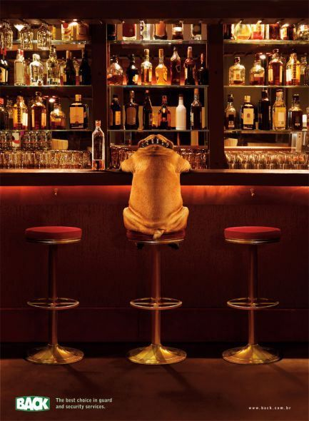 Bulldogs and Booze « BaggyBulldogs HAHA! this pic made me smile. I hope that bully has a designated driver!