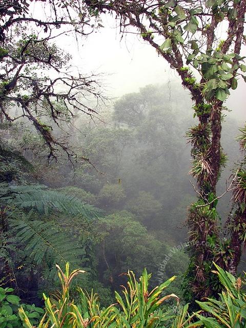 Clima de mistério na Mata Atlântica preservada. Paisagem que pode ser apreciada na Serra da Graciosa em Morretes/Paraná - Brasil  by Vida de Viajante, via Flickr