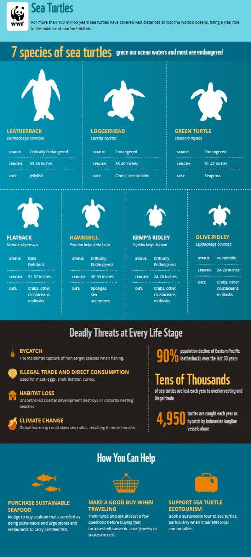 WWF Sea Turtle Infographic - Happy World Sea Turtle Day