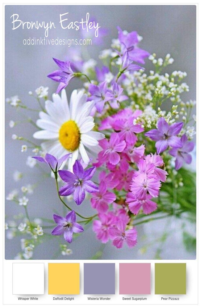Colour Combinations For Daisy Delight Part A Color