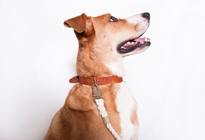 Design dog leash and leather collar cognac.
