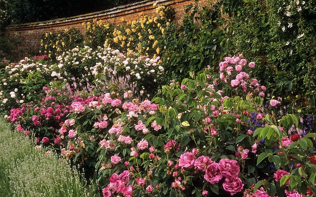 Mottisfont Abbey Garden, Hampshire, UK   An outstanding old fashioned rose garden (3 of 20)   Walled garden with historic shrub roses and climbers by ukgardenphotos, via Flickr