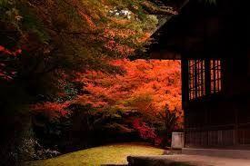「三渓園 紅葉」の画像検索結果