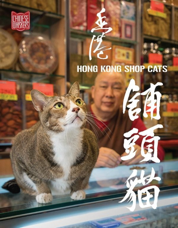 Discover the photos of the travel cat photography book HONG KONG SHOP CATS by photographer Marcel Heynen at http://www.traveling-cats.com/2017/04/cats-from-hong-kong-china.html (travel photography book, cat photography book, Shop Cats of Hong Kong, Marcel Heynen, books from famous photographers, books about Hong Kong)