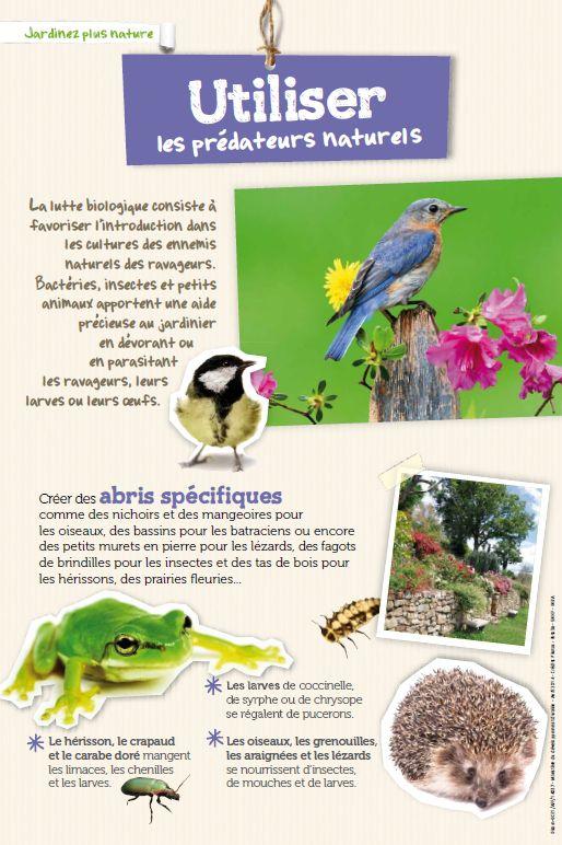 Utiliser les prédateurs naturels pour jardiner autrement