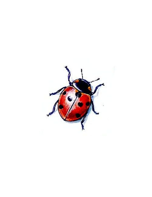 Red Ladybug Tattoo
