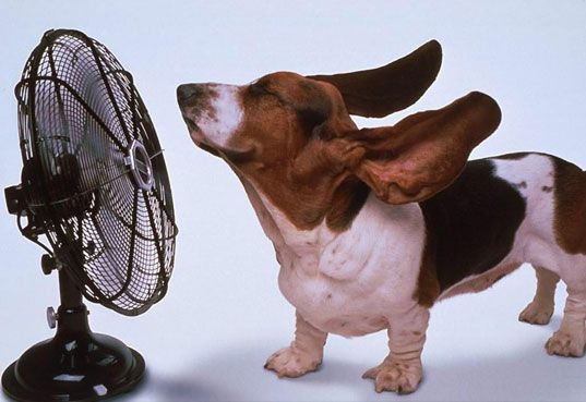So glad that my Louisiana AC repair people came tonight: Cool Dogs, Funny Dogs, Hot Flash, Fans, Basset Hound, Funny Animal, Dogs Pictures, Bassethound, Hot Dogs