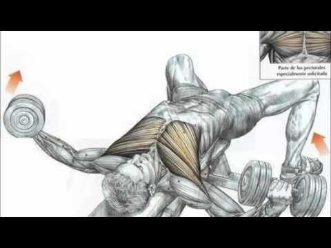 Como Tener Pectorales Voluminosos - Ejercicios Para el Pecho (2/3) - YouTube