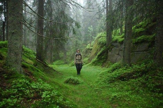 Eventyrskoger - naturvernforbundet.no