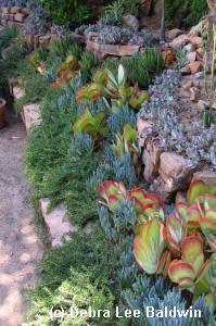 194 Best Succulent Garden Designs Images On Pinterest | Succulents,  Landscaping And Succulent Landscaping
