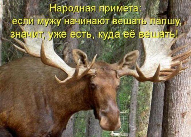 Смешные картинки про оленей рогоносцев, прикольные парнем