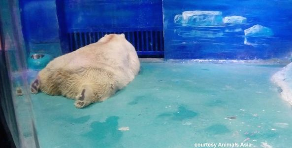 11/24/16 PETITION STILL OPEN FOR SIGS! The PETITIONsite.com Help shut down this horrible zoo in a Chinese mall. Wolves, polar bears and foxes deserve a better life. BE the voice that they don't have! Pls sign, date & pass it on, thank you!