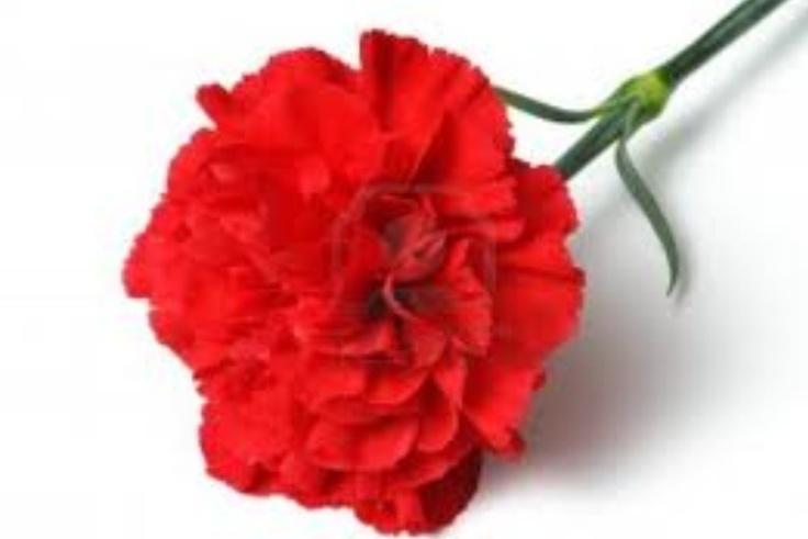 short memorial day tribute