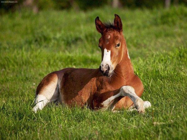 cheval fond decran