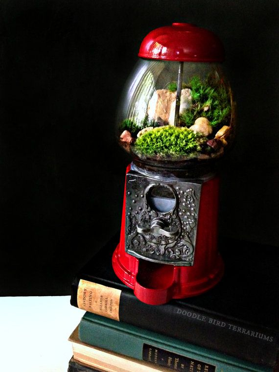 Beauty • Fashion • Food • Fitness • Design & Travel @Angy Cheong - Terrarium made from an old gumball machine.