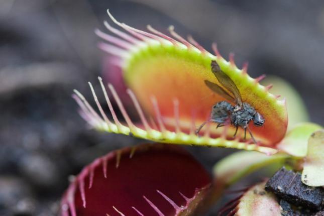 Curiosidades sobre las plantas carnívoras - Batanga